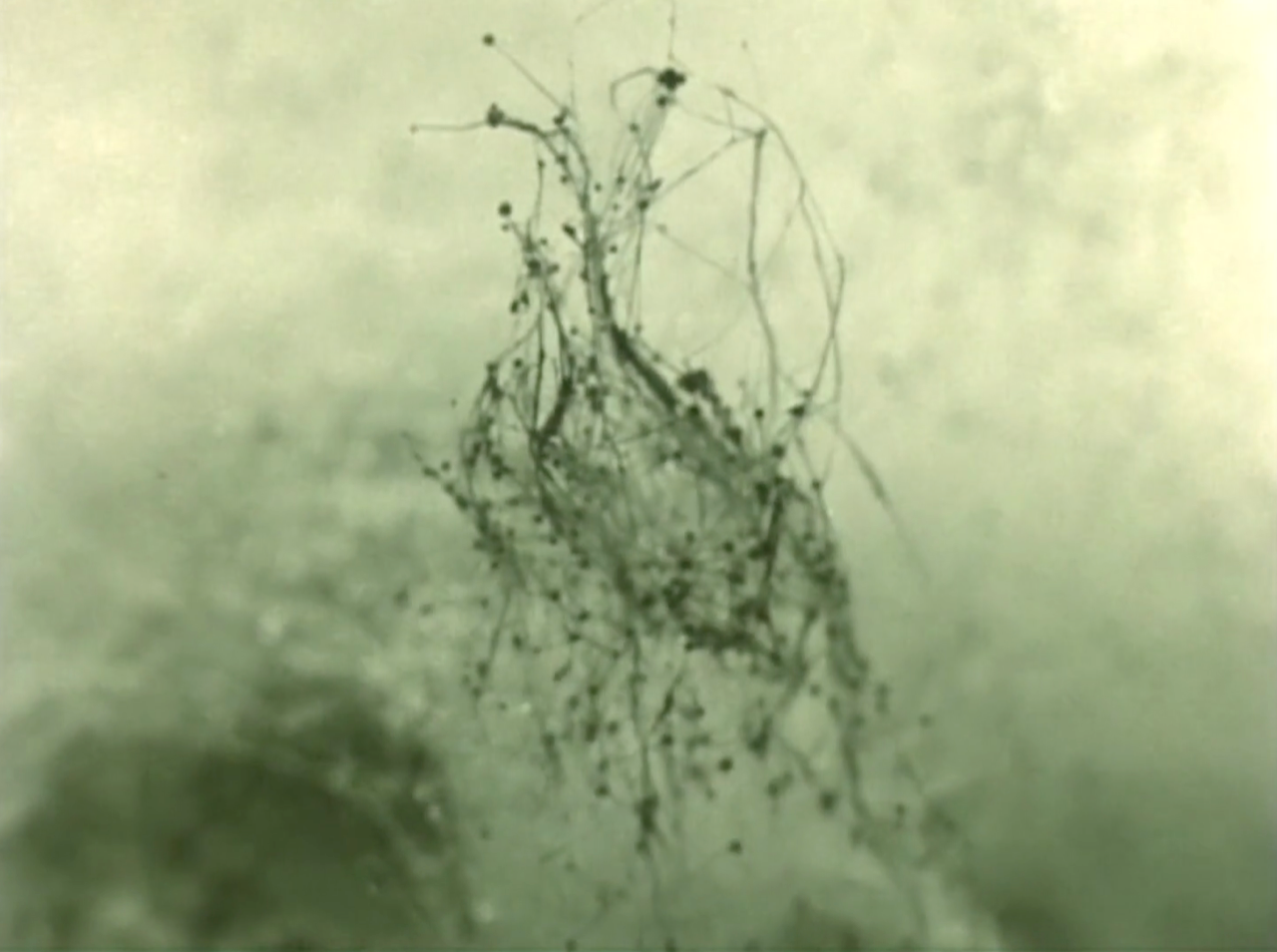 © Charlotte Pryce, Discoveries of the Forest Floor, 2006, 16 mm couleur, 4'00.